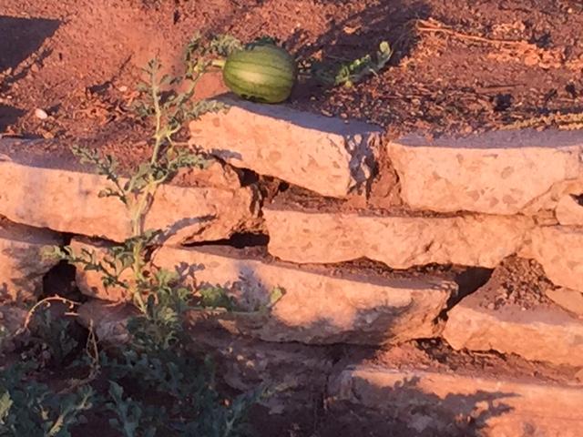jumpin melons