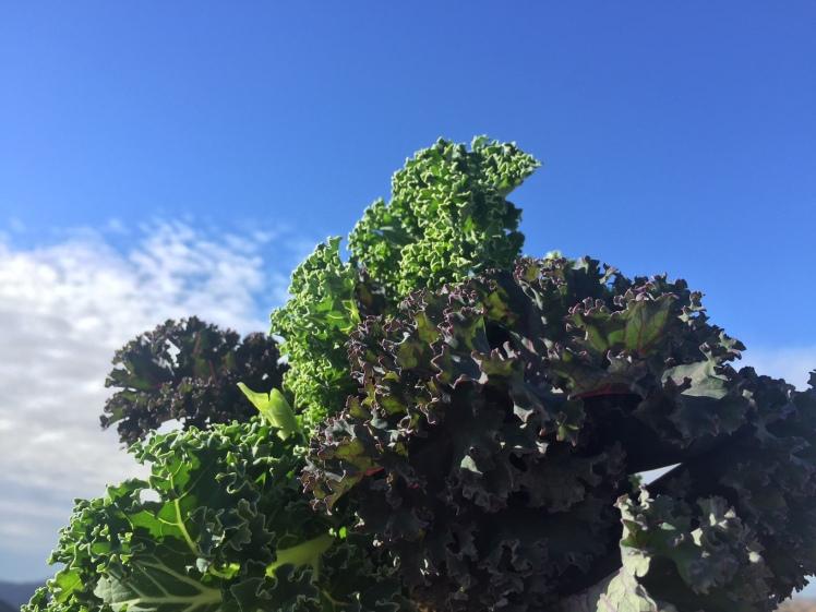 kale sky