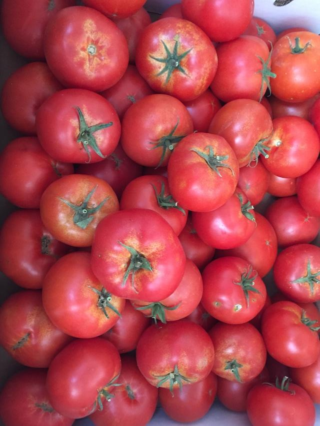 tomatoes 2016